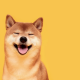 Newly-Minted Dogecoin Millionaire Wants Wealth for Future Family